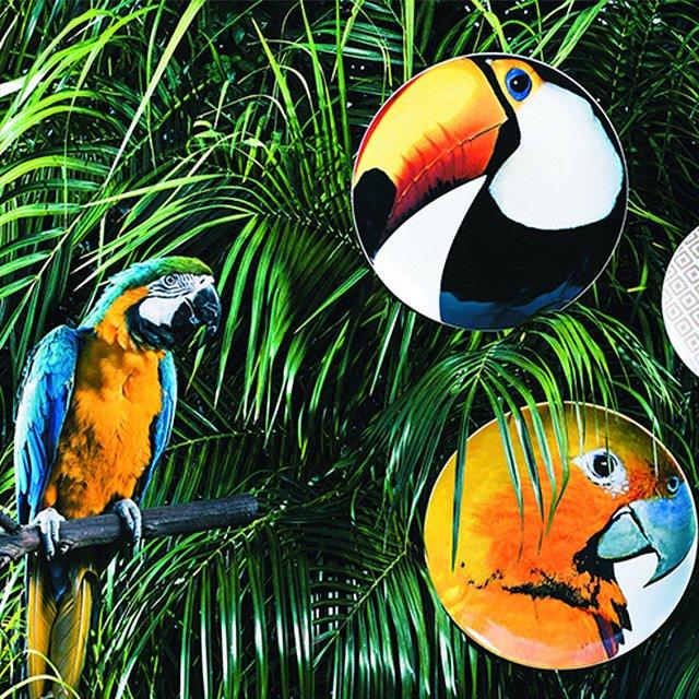 Tropikalne klimaty
